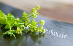 Fondo de la flora Fotografía de archivo libre de regalías