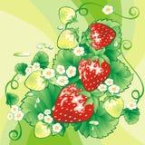 Fondo de la fresa Imagen de archivo libre de regalías