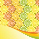 Fondo de la fruta cítrica. Fotografía de archivo libre de regalías