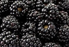 Fondo de la fruta de Blackberry fotografía de archivo libre de regalías