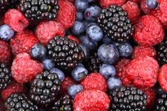 Fondo de la fruta del bosque foto de archivo