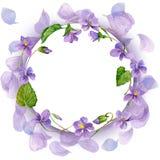 Fondo de la guirnalda y de la flor del jardín watercolor Fotos de archivo libres de regalías