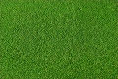 Fondo de la hierba Fotografía de archivo libre de regalías
