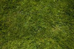 Fondo de la hierba Imagen de archivo libre de regalías