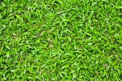 Fondo de la hierba Imagen de archivo