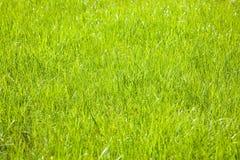 Fondo de la hierba. fotografía de archivo