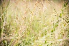 Fondo de la hierba Fotos de archivo libres de regalías