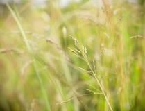 Fondo de la hierba Fotografía de archivo