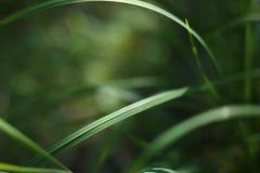 Fondo de la hierba Foto de archivo libre de regalías