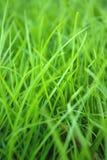 Fondo de la hierba Foto de archivo