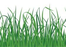 Fondo de la hierba con el borde inconsútil Fotos de archivo