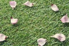 Fondo de la hierba con los pétalos color de rosa rosados y del espacio para el texto Imagen de archivo libre de regalías