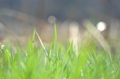Fondo de la hierba de la primavera foto de archivo