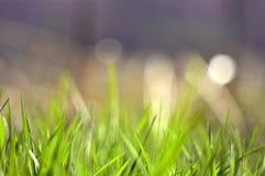 Fondo de la hierba de la primavera foto de archivo libre de regalías