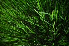 Fondo de la hierba del verano fotos de archivo