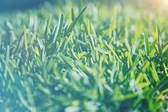 Fondo de la hierba del vintage Fotografía de archivo libre de regalías