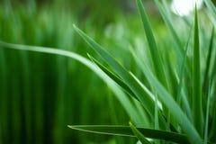 Fondo de la hierba de la primavera Fotos de archivo libres de regalías
