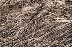 Fondo de la hierba seca Fotografía de archivo