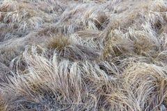 Fondo de la hierba seca en la ladera Imágenes de archivo libres de regalías