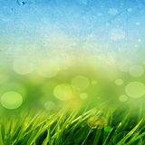Fondo de la hierba verde Imagen de archivo libre de regalías
