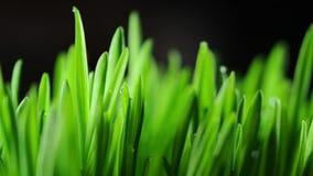 Fondo de la hierba verde almacen de metraje de vídeo