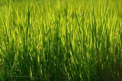 Fondo de la hierba verde Imagenes de archivo