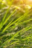 Fondo de la hierba verde, hierba abstracta de los fondos naturales Fotografía de archivo libre de regalías