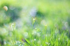 Fondo de la hierba verde - ahorrador de pantalla a color - naturaleza de tan fino y hermoso Fotos de archivo