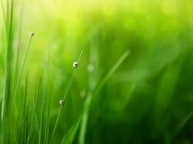 Fondo de la hierba verde con el bokeh del color Imágenes de archivo libres de regalías