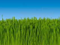 Fondo de la hierba verde contra el cielo azul (foco macro) 16 inc. Foto de archivo