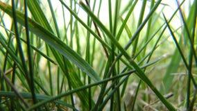 Fondo de la hierba verde, primer macro, papel pintado hermoso foto de archivo libre de regalías