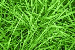 Fondo de la hierba verde imágenes de archivo libres de regalías