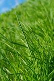 Fondo de la hierba y del cielo de la primavera Foto de archivo libre de regalías