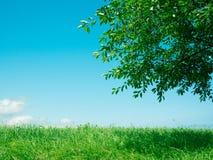 Fondo de la hierba y de la naturaleza del árbol imagenes de archivo