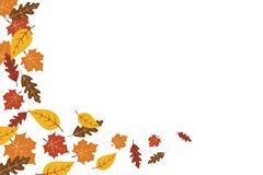 Fondo de la hoja de arce de las hojas de otoño Ejemplo del vector del fondo del otoño stock de ilustración