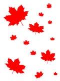 Fondo de la hoja de arce de Canadá Fotos de archivo libres de regalías