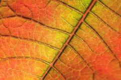 Fondo de la hoja del color Imagenes de archivo