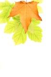 Fondo de la hoja del otoño Imagen de archivo libre de regalías