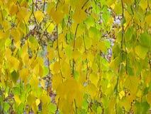 Fondo de la hoja del otoño - fotos comunes Imagenes de archivo