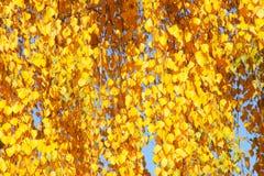 Fondo de la hoja del otoño - fotos comunes Fotografía de archivo