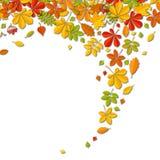 Fondo de la hoja del otoño que cae con el lugar para el texto aislado en blanco Imagenes de archivo