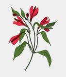Fondo de la impresión del Alstroemeria La composición del vector del rosa de la primavera florece el ejemplo Tarjeta de la invita Imagen de archivo