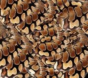 Fondo de la impresión de la materia textil de la piel de serpiente foto de archivo libre de regalías