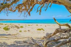 Fondo de la isla de Chrissi Imágenes de archivo libres de regalías