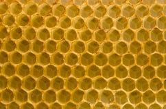 Fondo de la macro del primer de la miel de las FO del panal. Imagen de archivo
