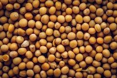 Fondo de la macro de las semillas de mostaza imagen de archivo libre de regalías
