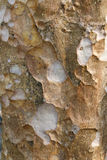 Fondo de la madera 246 Fotografía de archivo libre de regalías