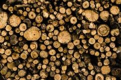 Fondo de la madera de madera de las pilas La pila de madera registra el almacenamiento para la industria Las sierras cortaron los fotos de archivo libres de regalías