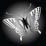 Fondo de la mariposa Imágenes de archivo libres de regalías