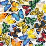 Fondo de la mariposa Foto de archivo libre de regalías